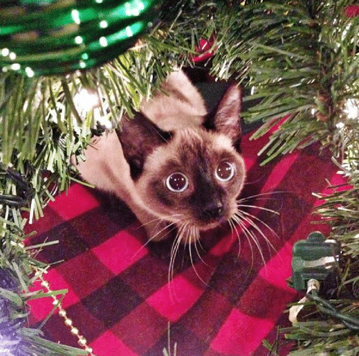 Adorable cats who are a about Christmas Trees
