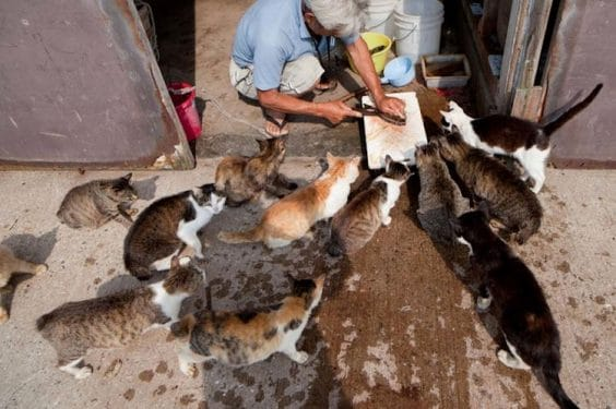 Amazing Island Fukuoka in Japan is called the Cat Heaven