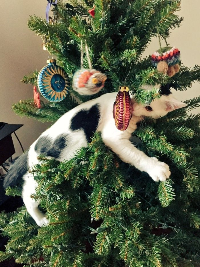 adorable cats who are excited about christmas trees this