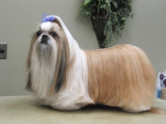 15 Very Interesting and Funny Dog Haircuts
